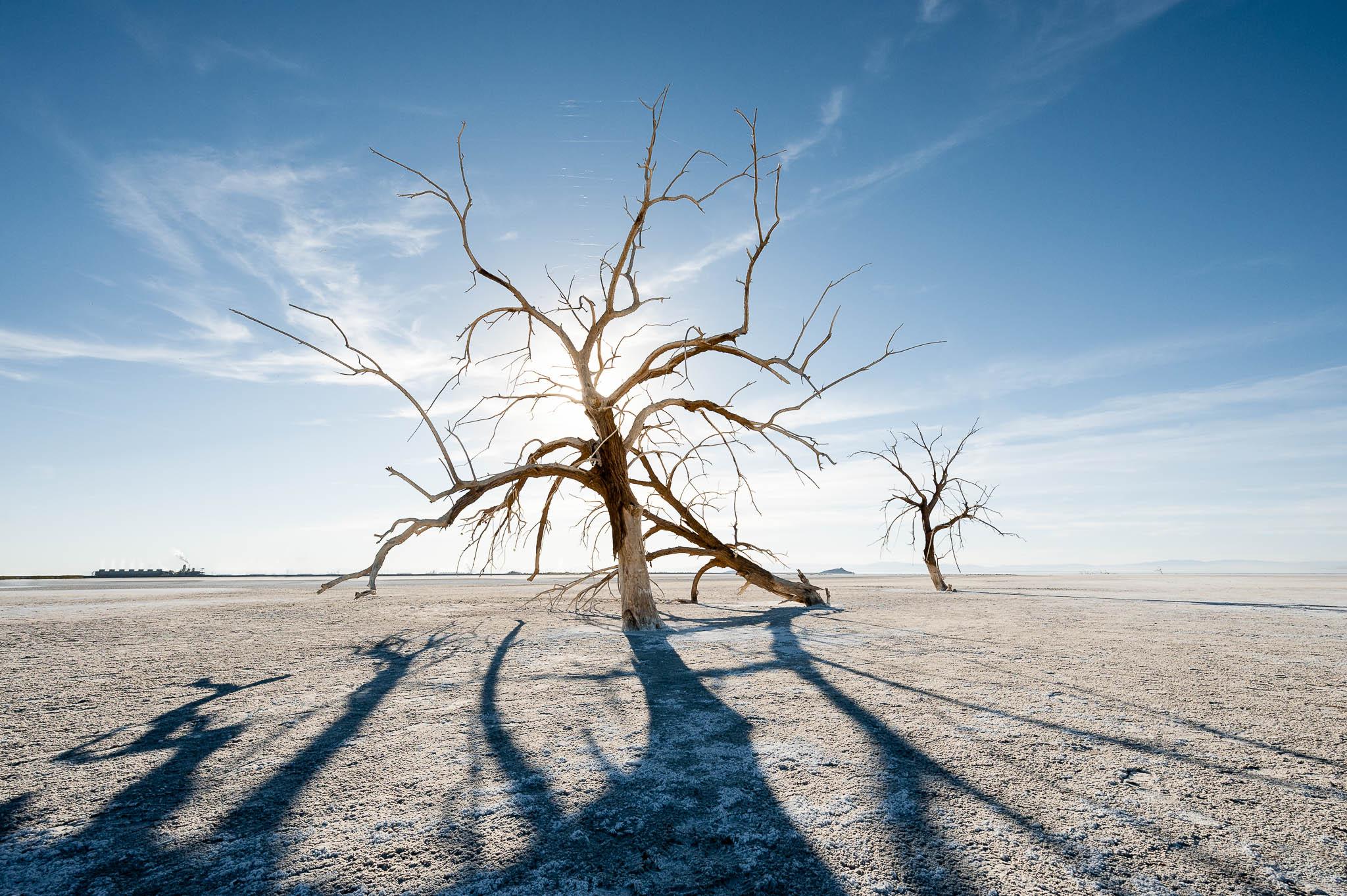 природа деревья поле пустыня  № 3805734 без смс